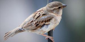 Vonkajšie vtáctvo