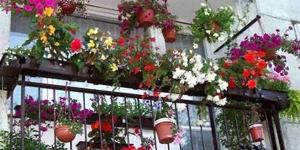 Na balkónové rastliny