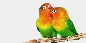 Exotické vtáctvo