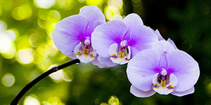 Na orchidey