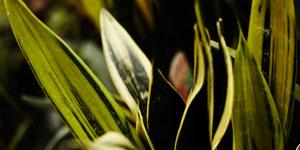 Ostatní izbové rastliny