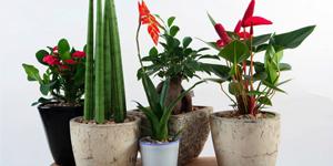 Na izbove rastliny