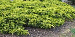 Pôdopokryvné rastliny
