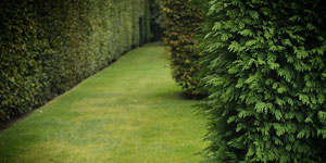 Stálozelené rastliny
