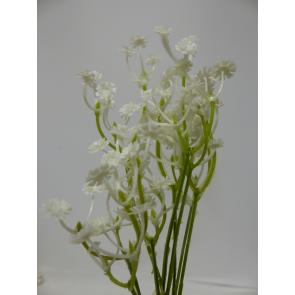 UK Gypsophylla