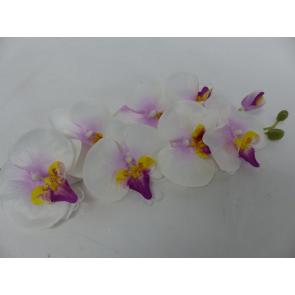 UK Orchidea ružová