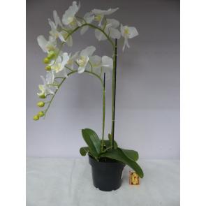 UK Orchidea 2 vetvy biela