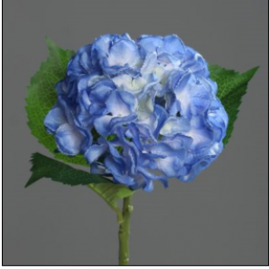 UK Hortenzie vetvička modrá