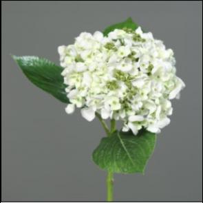 UK Hortenzie vetvička biela