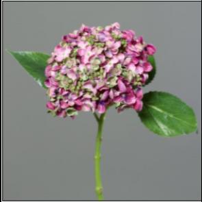 UK Hortenzie vetvička ružová