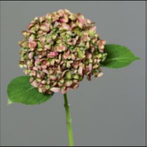 UK Hortenzie vetvička zeleno fialová