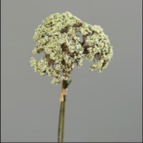 UK Kôpor kvet