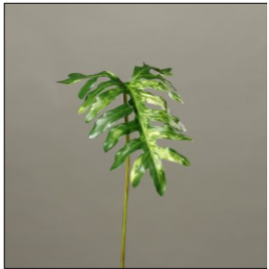 UK Filodendron list