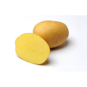 Sadbové brambory 5kg Anuschka