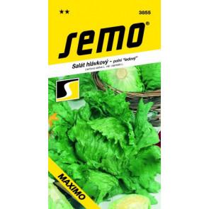 Salát hlávkový MAXIMO 0,6g