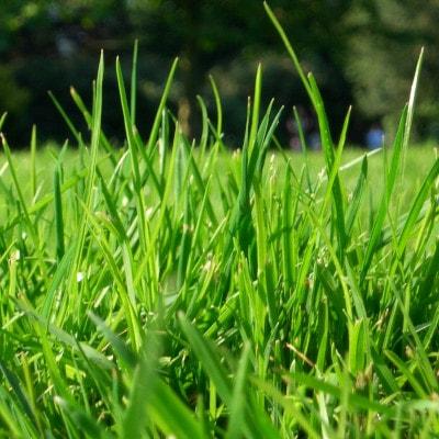Starostlivosť o trávnik