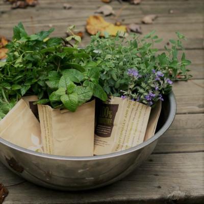 Čerstvé bylinky pre váš stôl